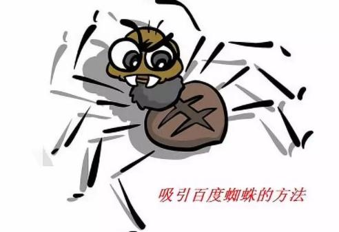 网站快速被蜘蛛抓取方法